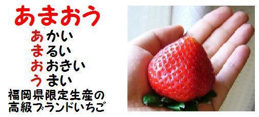 「あまおう」福岡県だけで生産されている高級ブランドいちご